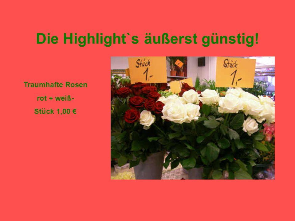Die Highlight`s äußerst günstig! Traumhafte Rosen rot + weiß- Stück 1,00