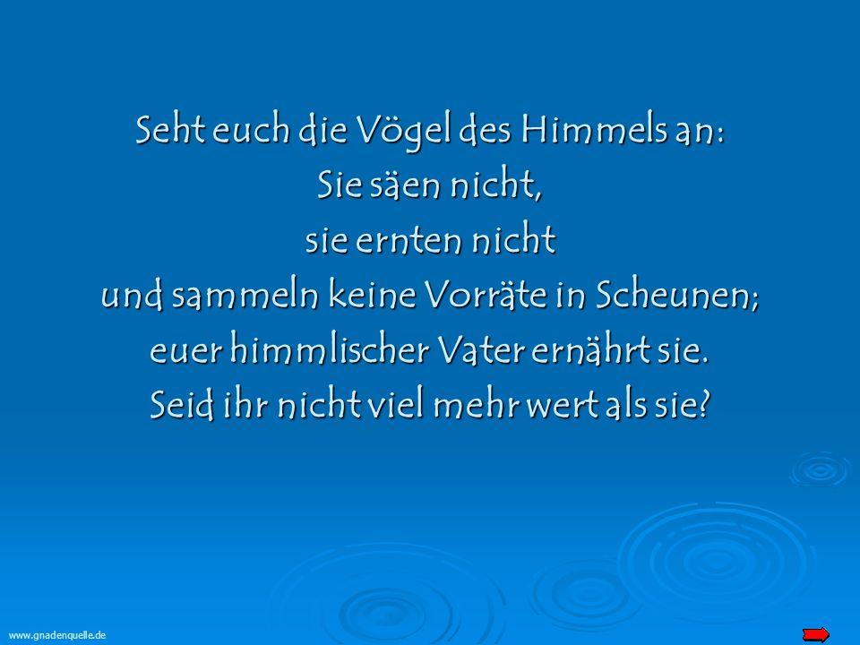 www.gnadenquelle.de Seht euch die Vögel des Himmels an: Sie säen nicht, sie ernten nicht und sammeln keine Vorräte in Scheunen; euer himmlischer Vater ernährt sie.