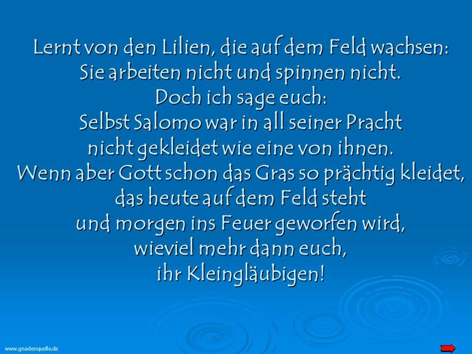 www.gnadenquelle.de Lernt von den Lilien, die auf dem Feld wachsen: Sie arbeiten nicht und spinnen nicht.