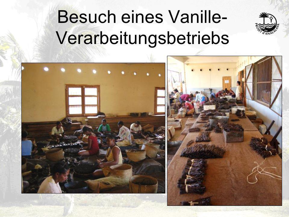Besuch eines Vanille- Verarbeitungsbetriebs