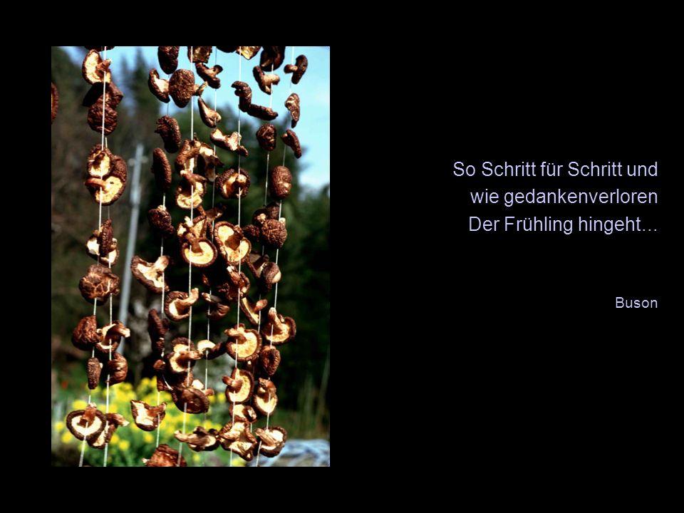 So Schritt für Schritt und wie gedankenverloren Der Frühling hingeht... Buson Wartefeld X X