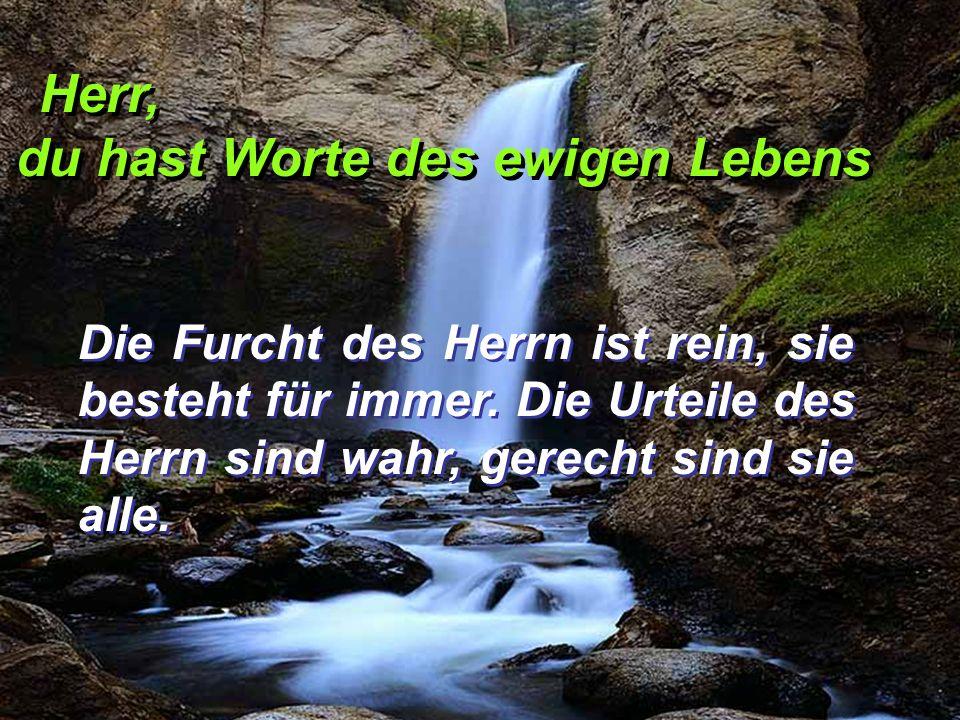 Herr, du hast Worte des ewigen Lebens Herr, du hast Worte des ewigen Lebens Die Furcht des Herrn ist rein, sie besteht für immer. Die Urteile des Herr