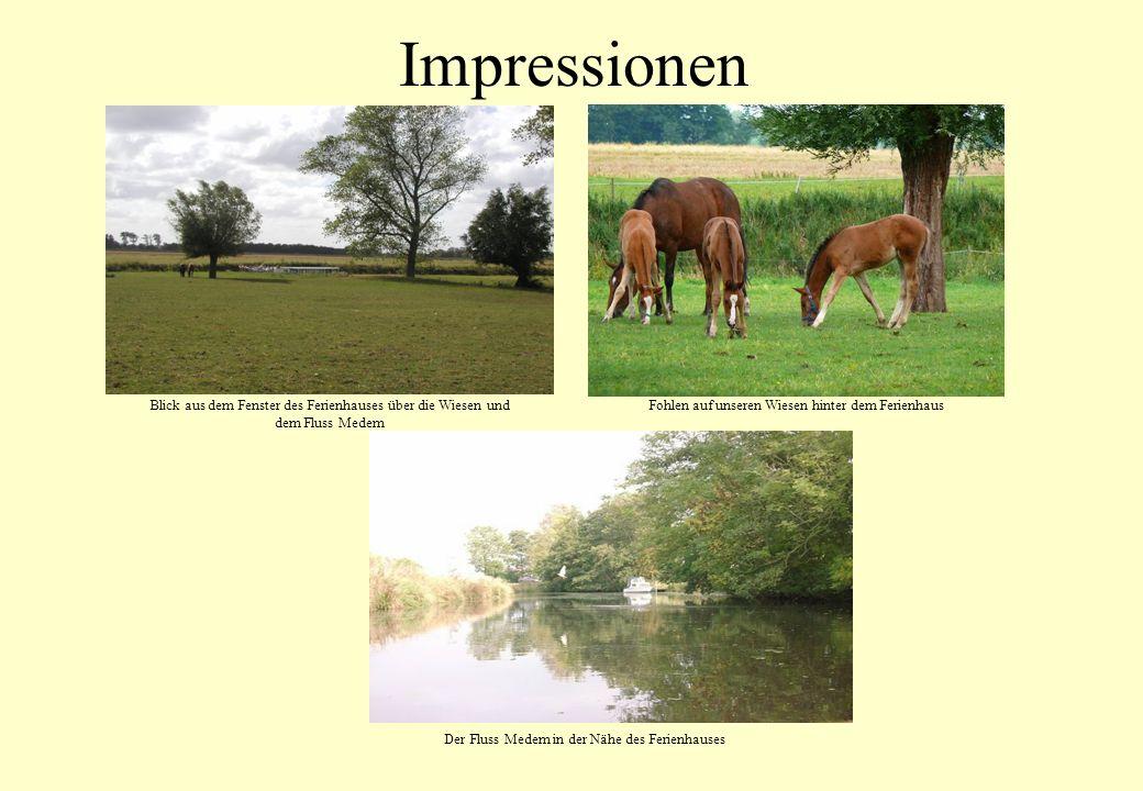 Impressionen Blick aus dem Fenster des Ferienhauses über die Wiesen und dem Fluss Medem Der Fluss Medem in der Nähe des Ferienhauses Fohlen auf unsere