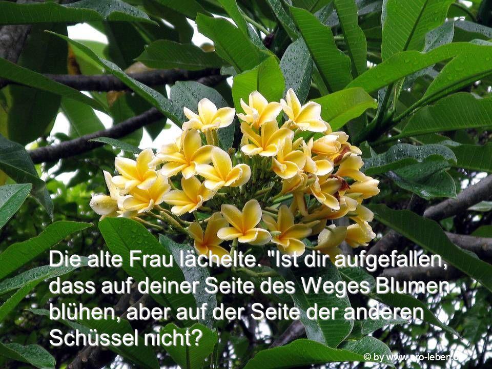© by www.pro-leben.de