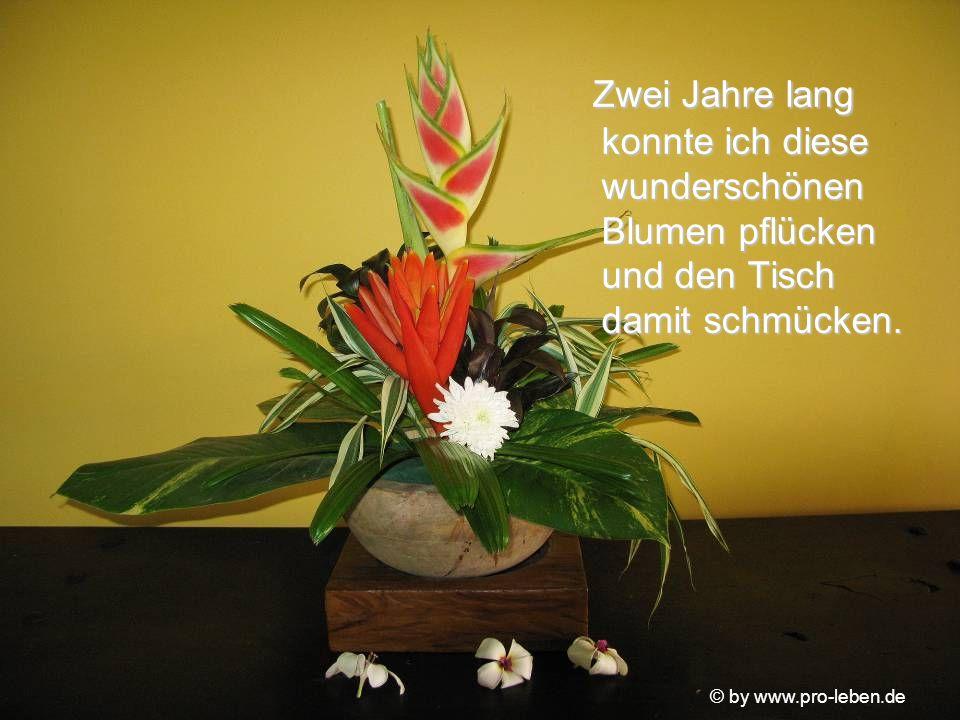 © by www.pro-leben.de Ich habe auf deiner Seite des Pfades Blumensamen gesät, weil ich mir deines Fehlers bewusst war. Nun gießt du sie jeden Tag, wen