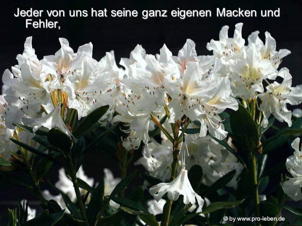 © by www.pro-leben.de Wenn du nicht genauso wärst, wie du bist, würde diese Schönheit nicht existieren und unser Haus beehren.