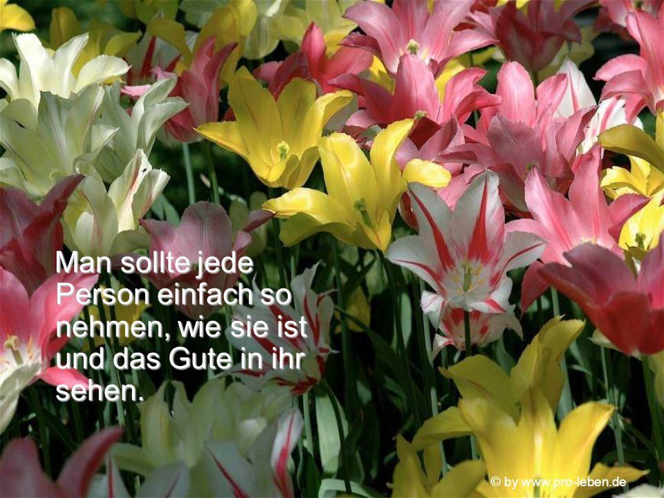 © by www.pro-leben.de aber es sind die Macken und Sprünge, die unser Leben so interessant und lohnenswert machen. aber es sind die Macken und Sprünge,