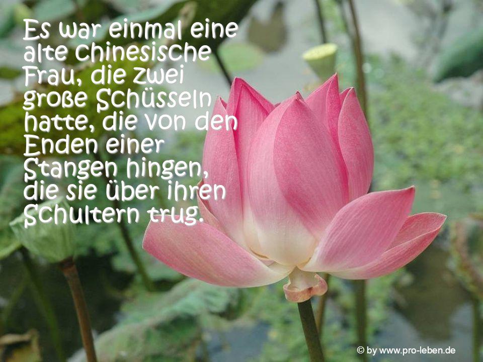 © by www.pro-leben.de Zwei Jahre lang konnte ich diese wunderschönen Blumen pflücken und den Tisch damit schmücken.