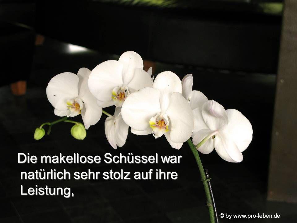 © by www.pro-leben.de Die makellose Schüssel war natürlich sehr stolz auf ihre Leistung, Die makellose Schüssel war natürlich sehr stolz auf ihre Leistung,