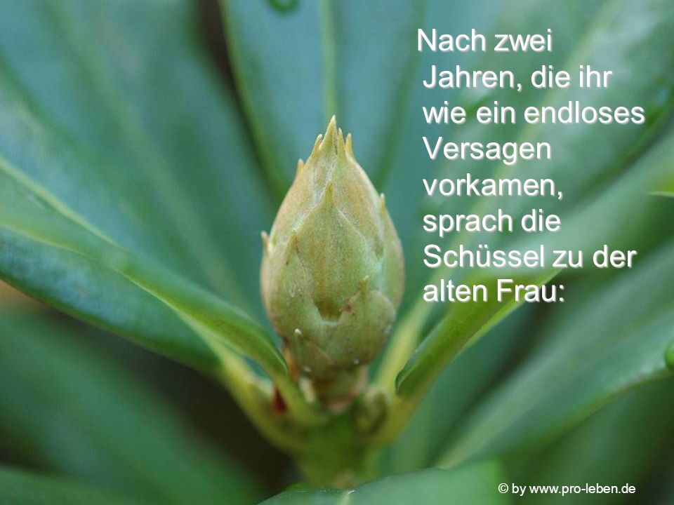 © by www.pro-leben.de Nach zwei Jahren, die ihr wie ein endloses Versagen vorkamen, sprach die Schüssel zu der alten Frau: Nach zwei Jahren, die ihr wie ein endloses Versagen vorkamen, sprach die Schüssel zu der alten Frau:
