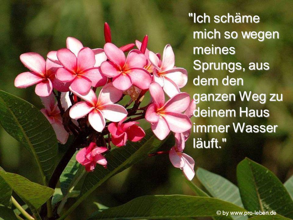 © by www.pro-leben.de Nach zwei Jahren, die ihr wie ein endloses Versagen vorkamen, sprach die Schüssel zu der alten Frau: Nach zwei Jahren, die ihr w