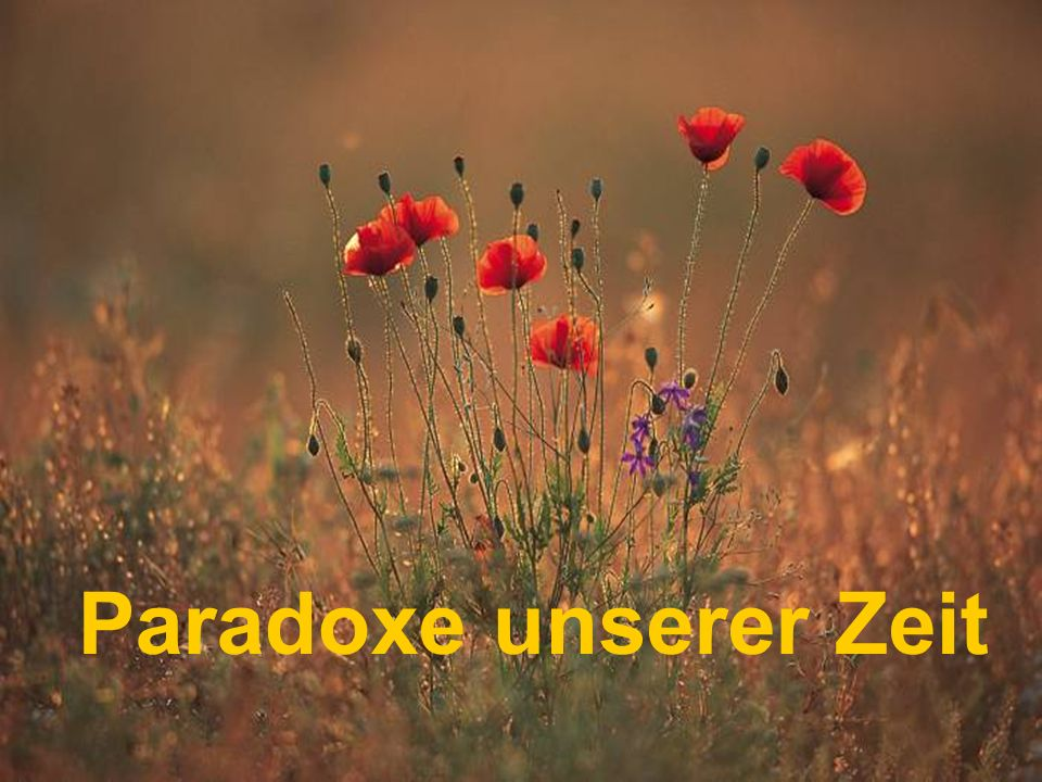 Paradoxe unserer Zeit