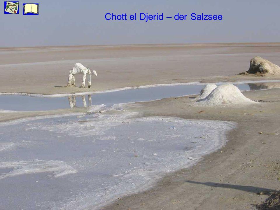 Chott el Djerid – der Salzsee