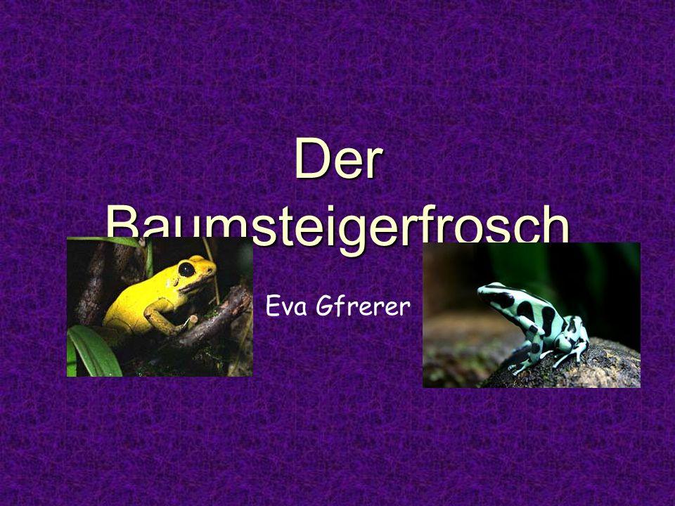 Der Baumsteigerfrosch Eva Gfrerer