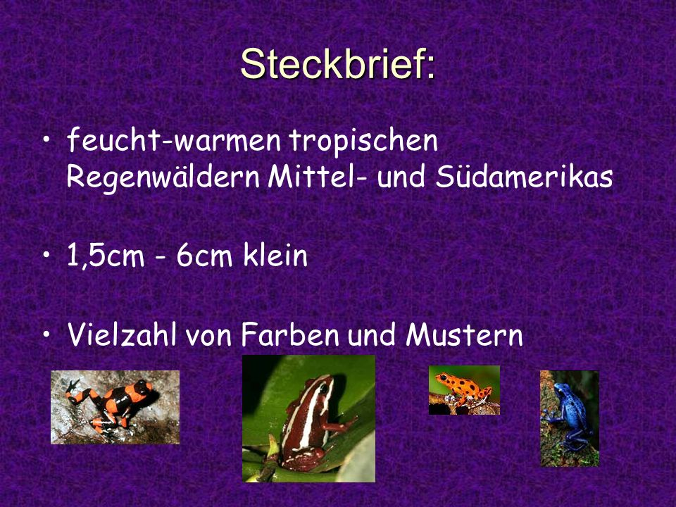 Steckbrief: feucht-warmen tropischen Regenwäldern Mittel- und Südamerikas 1,5cm - 6cm klein Vielzahl von Farben und Mustern