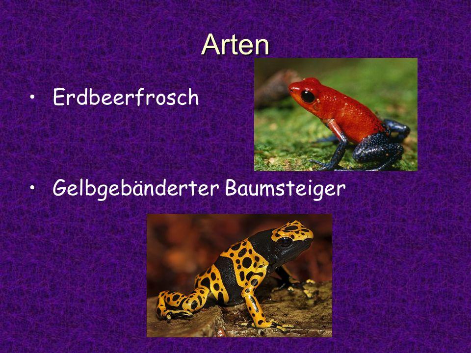 Fortpflanzung Männchen Schallblasen - trillernde Rufe Eier an Land schlüpfenden Larven -> Rücken d.