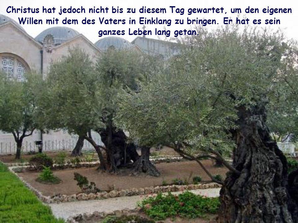 In diesem Gebet im Garten Getsemani kommt die Dramatik zum Ausdruck, die sich in Jesus abspielt: Er ist innerlich zerrissen, weil der Tod, den der Vat