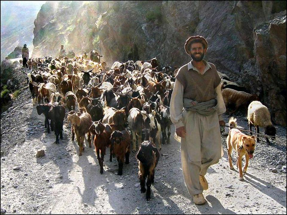 Ziegenkarawane im Shishi-Tal, Chitral, Pakistan