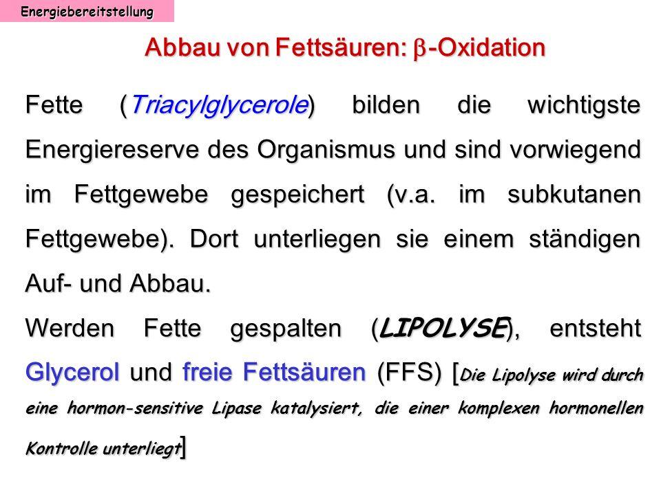 Energiebereitstellung Abbau von Fettsäuren: -Oxidation Fette (Triacylglycerole) bilden die wichtigste Energiereserve des Organismus und sind vorwiegen