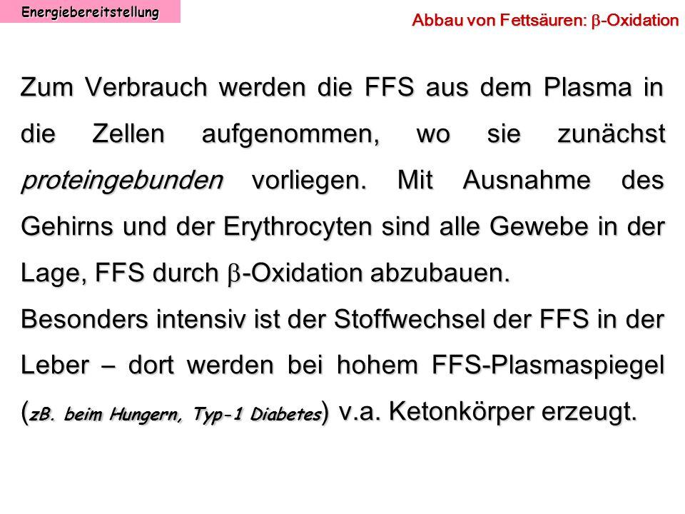 Energiebereitstellung Abbau von Fettsäuren: -Oxidation Zum Verbrauch werden die FFS aus dem Plasma in die Zellen aufgenommen, wo sie zunächst proteing