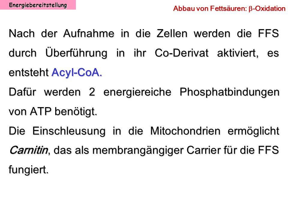 Energiebereitstellung Abbau von Fettsäuren: -Oxidation Nach der Aufnahme in die Zellen werden die FFS durch Überführung in ihr Co-Derivat aktiviert, e