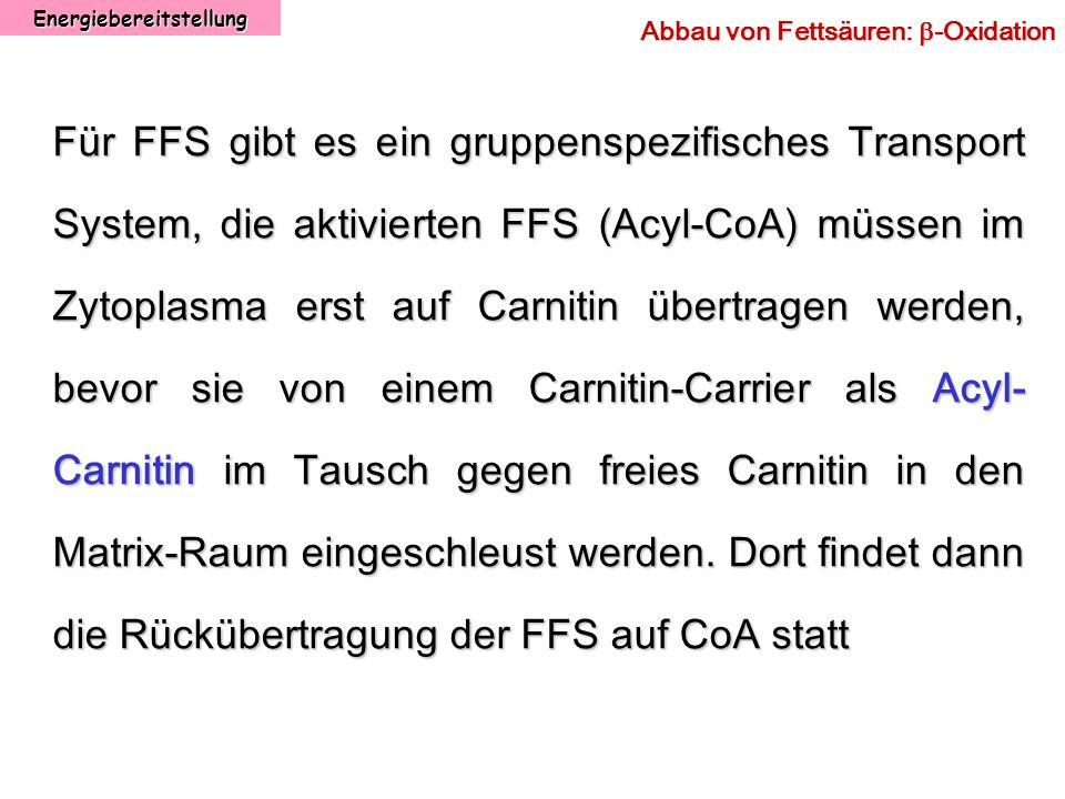 Energiebereitstellung Abbau von Fettsäuren: -Oxidation Für FFS gibt es ein gruppenspezifisches Transport System, die aktivierten FFS (Acyl-CoA) müssen