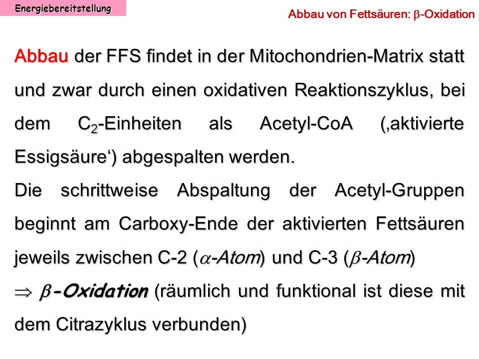Energiebereitstellung Abbau von Fettsäuren: -Oxidation Abbau der FFS findet in der Mitochondrien-Matrix statt und zwar durch einen oxidativen Reaktion