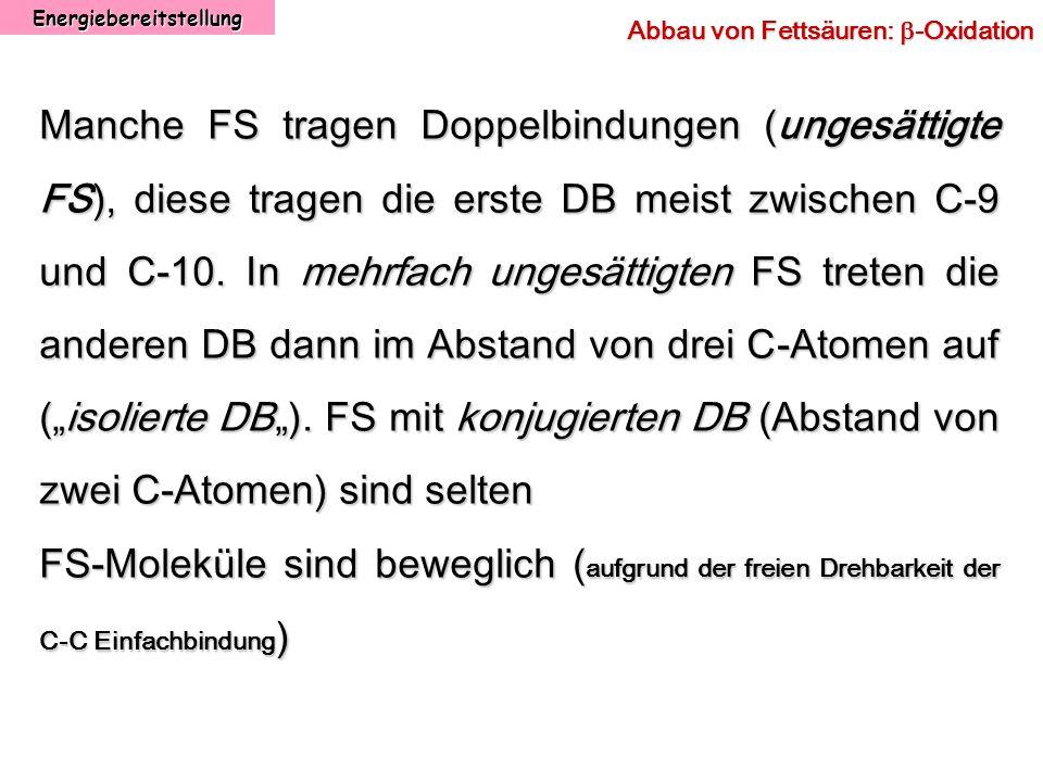Energiebereitstellung Abbau von Fettsäuren: -Oxidation Manche FS tragen Doppelbindungen (ungesättigte FS), diese tragen die erste DB meist zwischen C-