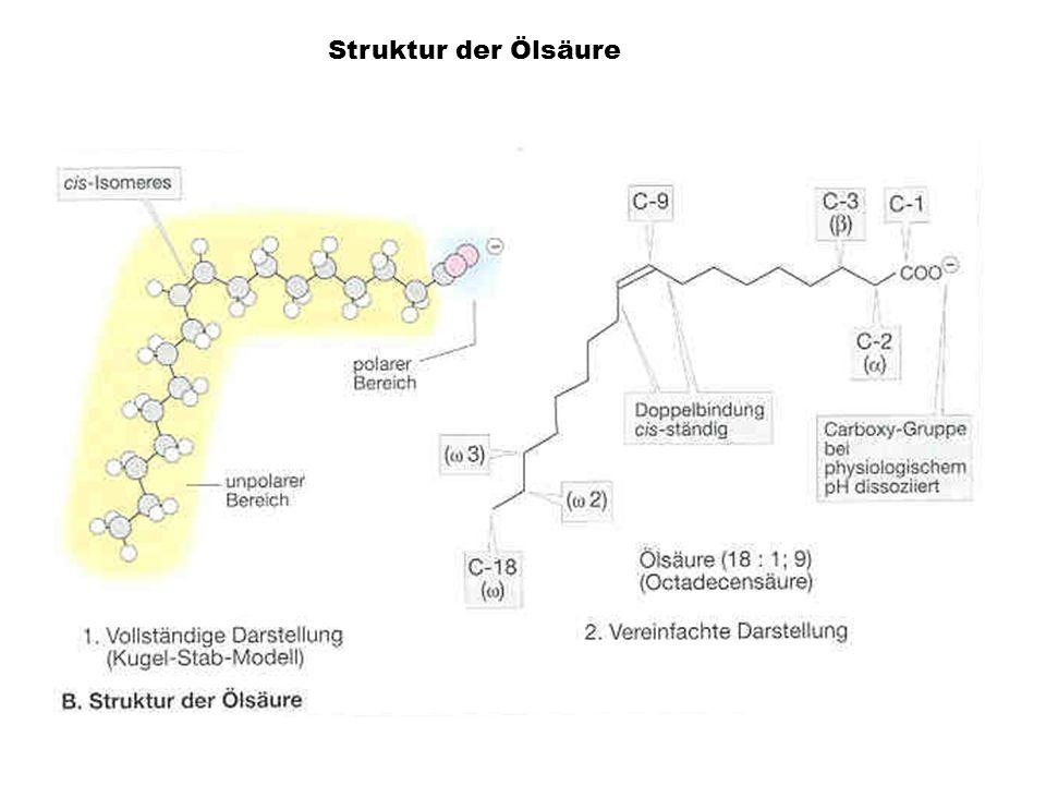 Struktur der Ölsäure