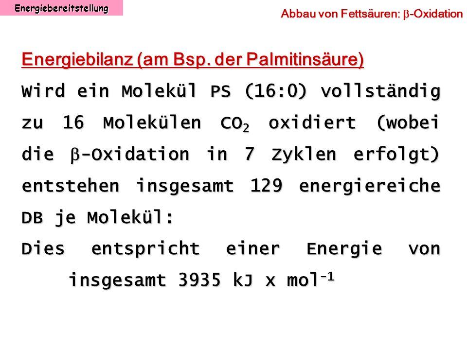Energiebereitstellung Abbau von Fettsäuren: -Oxidation Energiebilanz (am Bsp. der Palmitinsäure) Wird ein Molekül PS (16:0) vollständig zu 16 Moleküle