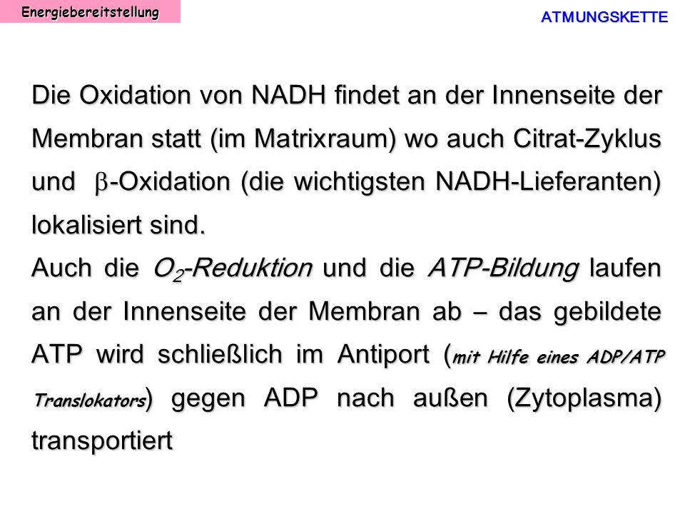 EnergiebereitstellungATMUNGSKETTE Die Oxidation von NADH findet an der Innenseite der Membran statt (im Matrixraum) wo auch Citrat-Zyklus und -Oxidati