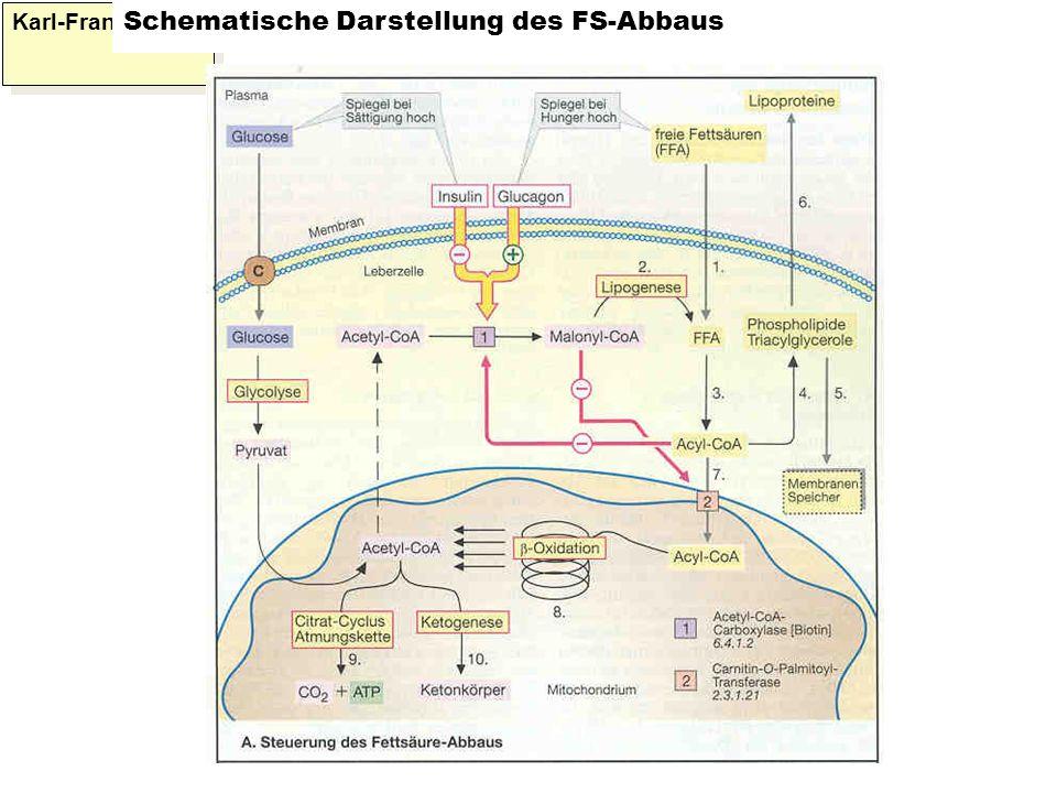 Karl-Franzens: Schematische Darstellung des FS-Abbaus