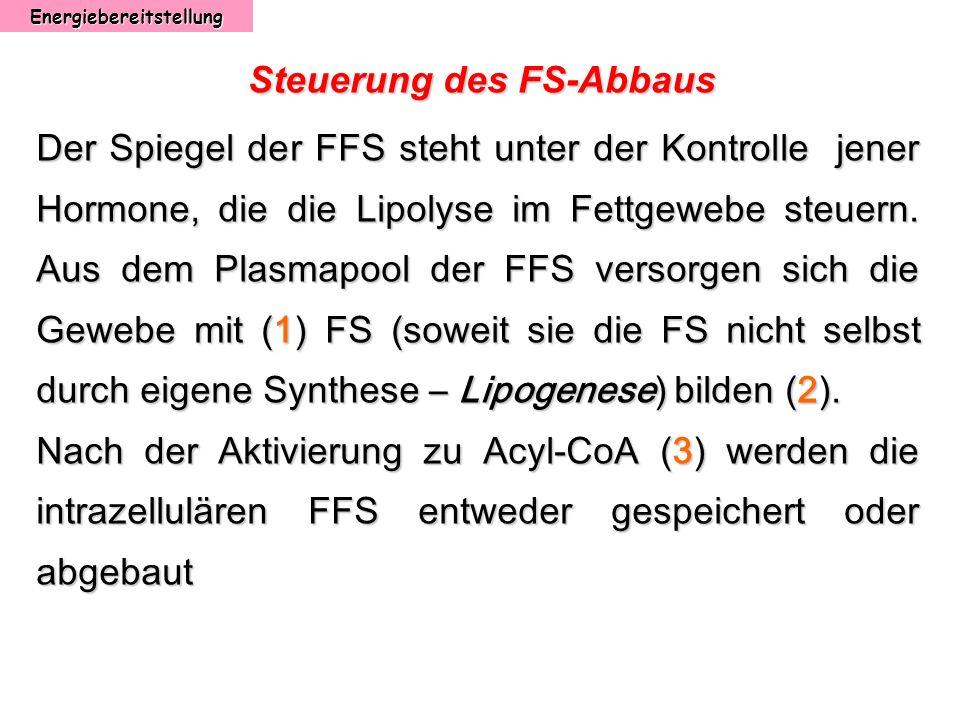 Energiebereitstellung Steuerung des FS-Abbaus Der Spiegel der FFS steht unter der Kontrolle jener Hormone, die die Lipolyse im Fettgewebe steuern. Aus