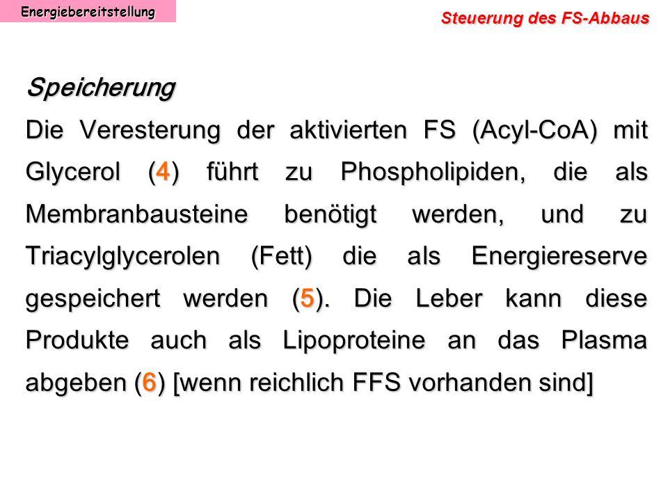 Energiebereitstellung Steuerung des FS-Abbaus Speicherung Die Veresterung der aktivierten FS (Acyl-CoA) mit Glycerol (4) führt zu Phospholipiden, die