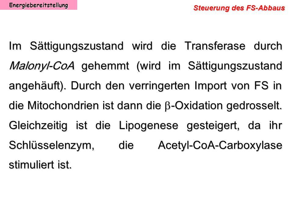Energiebereitstellung Steuerung des FS-Abbaus Im Sättigungszustand wird die Transferase durch Malonyl-CoA gehemmt (wird im Sättigungszustand angehäuft