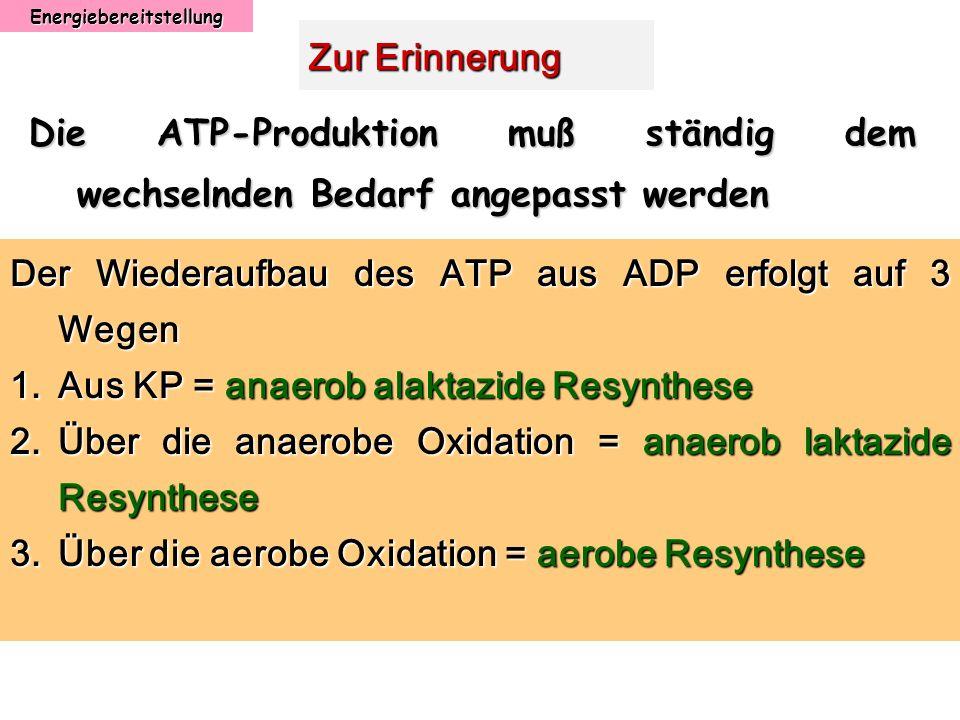 Energiebereitstellung Zur Erinnerung Die ATP-Produktion muß ständig dem wechselnden Bedarf angepasst werden Der Wiederaufbau des ATP aus ADP erfolgt a