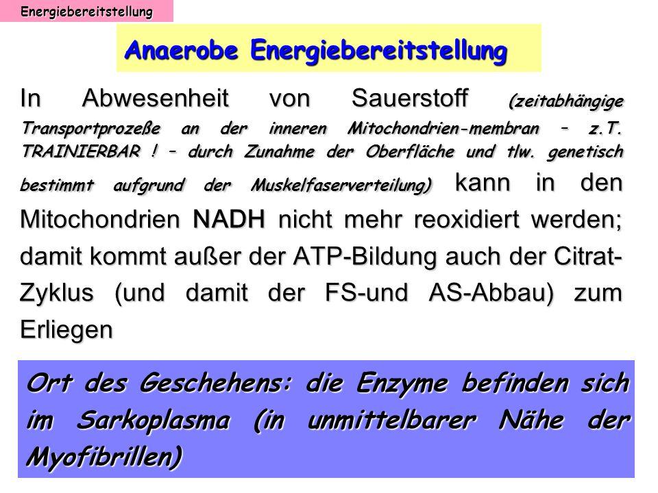 Energiebereitstellung Anaerobe Energiebereitstellung In Abwesenheit von Sauerstoff (zeitabhängige Transportprozeße an der inneren Mitochondrien-membra