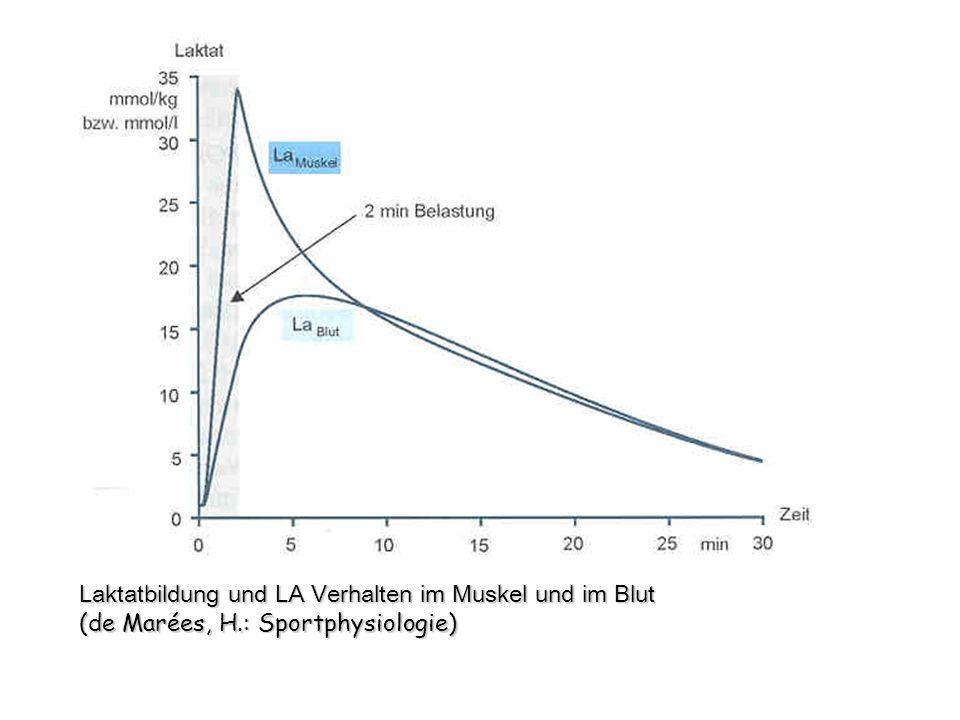 Laktatbildung und LA Verhalten im Muskel und im Blut (de Marées, H.: Sportphysiologie)