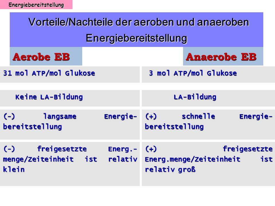 Energiebereitstellung Vorteile/Nachteile der aeroben und anaeroben Energiebereitstellung Vorteile/Nachteile der aeroben und anaeroben Energiebereitste