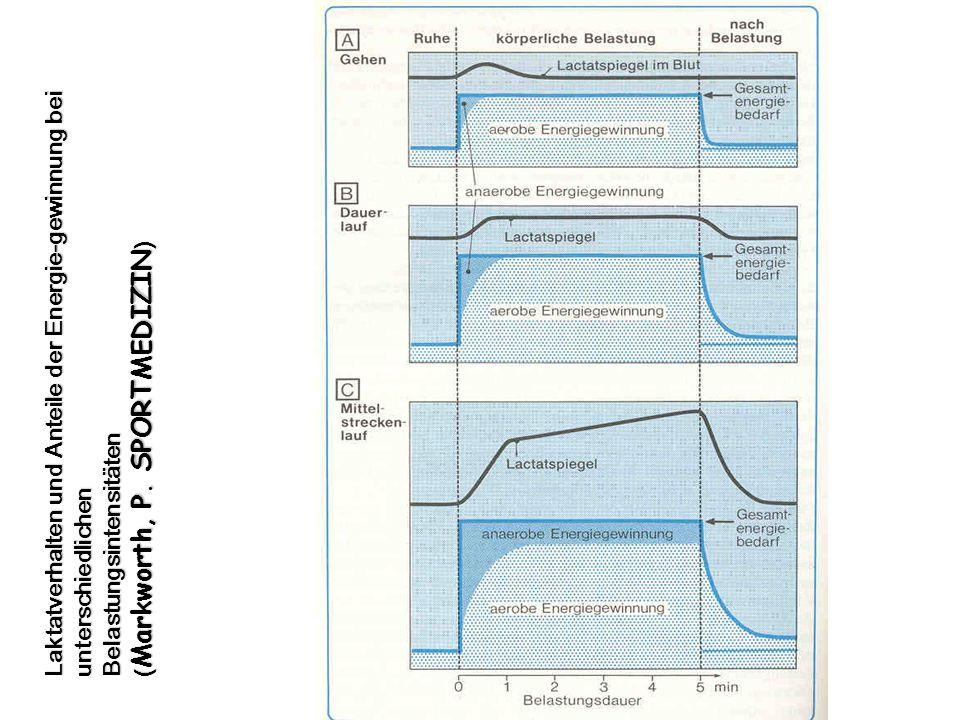 Laktatverhalten und Anteile der Energie-gewinnung bei unterschiedlichen Belastungsintensitäten ( Markworth, P. SPORTMEDIZIN )
