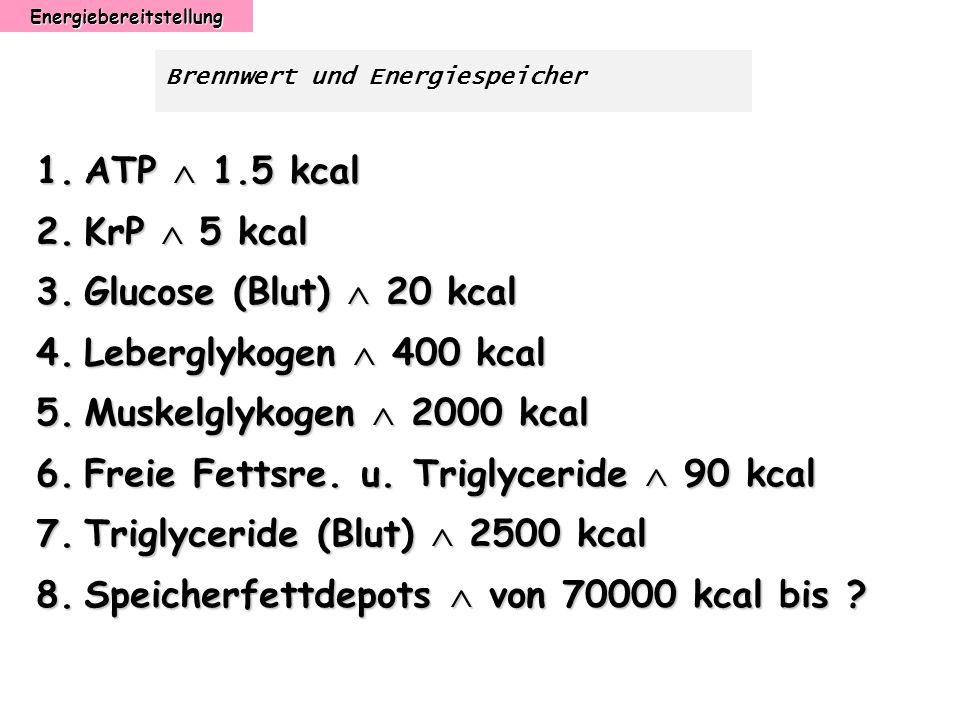 Energiebereitstellung Brennwert und Energiespeicher 1.ATP 1.5 kcal 2.KrP 5 kcal 3.Glucose (Blut) 20 kcal 4.Leberglykogen 400 kcal 5.Muskelglykogen 200