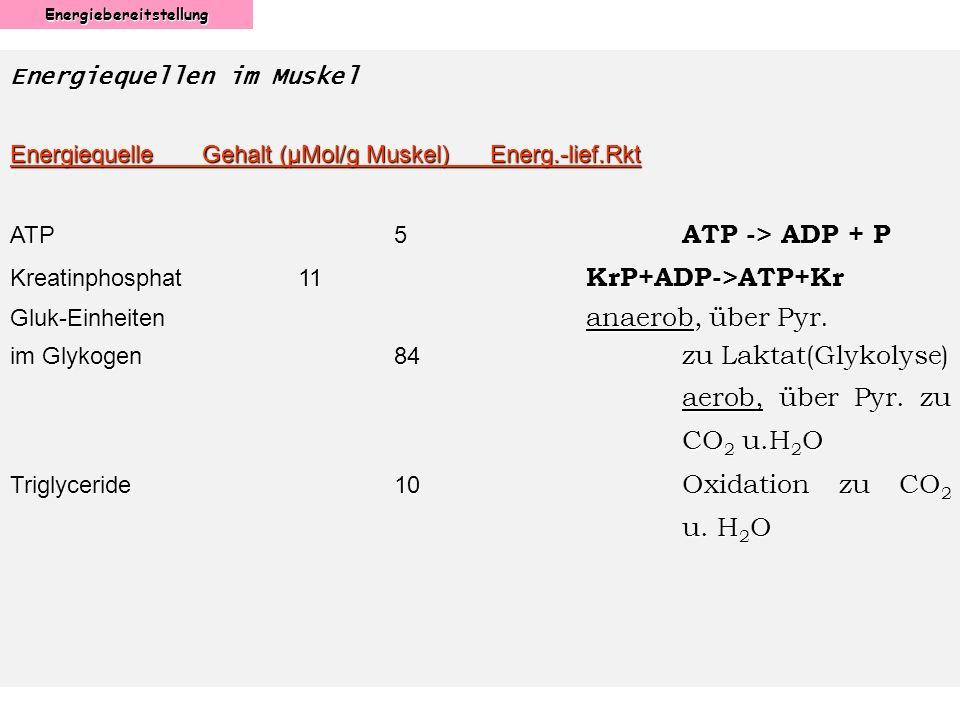 Energiebereitstellung Energiequellen im Muskel EnergiequelleGehalt (µMol/g Muskel)Energ.-lief.Rkt ATP5 ATP -> ADP + P Kreatinphosphat11 KrP+ADP->ATP+K