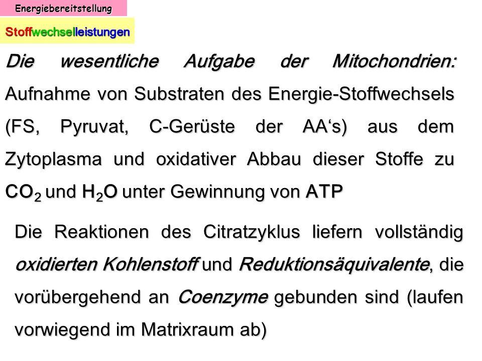 Energiebereitstellung Stoffwechselleistungen Die wesentliche Aufgabe der Mitochondrien: Aufnahme von Substraten des Energie-Stoffwechsels (FS, Pyruvat