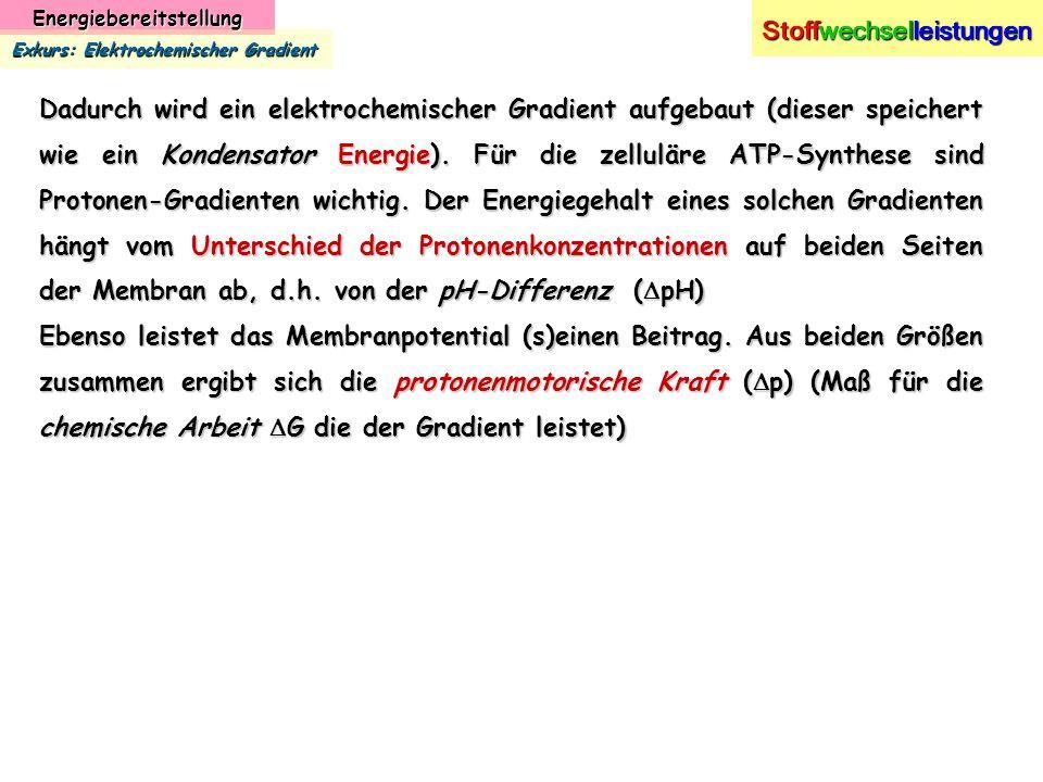Energiebereitstellung Stoffwechselleistungen Exkurs: Elektrochemischer Gradient Dadurch wird ein elektrochemischer Gradient aufgebaut (dieser speicher
