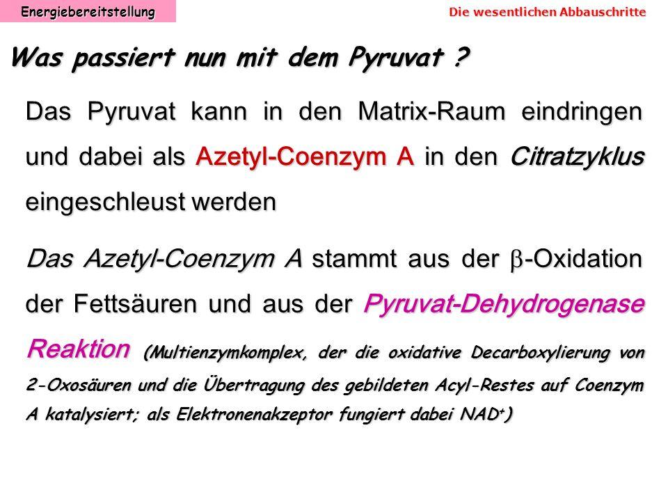 Energiebereitstellung Was passiert nun mit dem Pyruvat ? Das Pyruvat kann in den Matrix-Raum eindringen und dabei als Azetyl-Coenzym A in den Citratzy