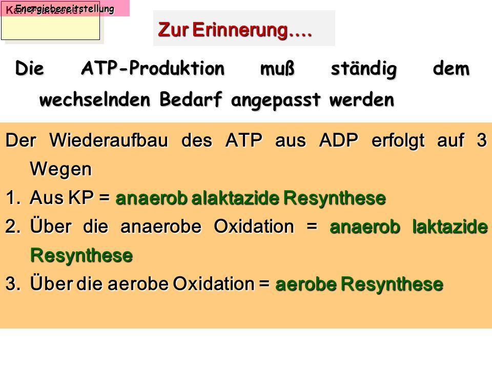 Karl-Franzens: Energiebereitstellung Zur Erinnerung…. Die ATP-Produktion muß ständig dem wechselnden Bedarf angepasst werden Der Wiederaufbau des ATP