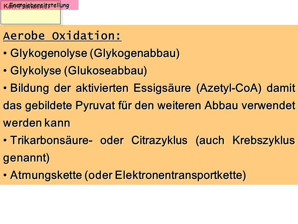 Karl-Franzens: Energiebereitstellung Aerobe Oxidation: Glykogenolyse (Glykogenabbau) Glykolyse (Glukoseabbau) Glykolyse (Glukoseabbau) Bildung der akt