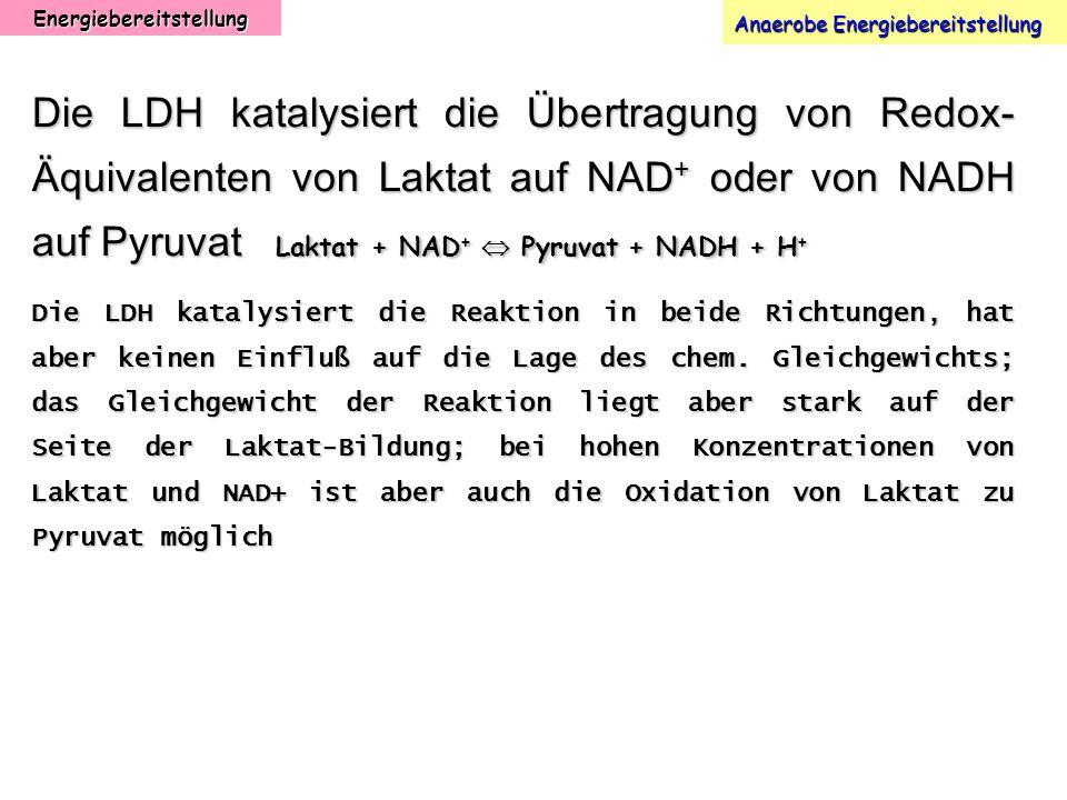 Energiebereitstellung Anaerobe Energiebereitstellung Die LDH katalysiert die Übertragung von Redox- Äquivalenten von Laktat auf NAD + oder von NADH au