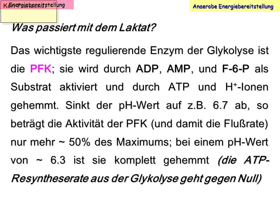 Karl-Franzens: Energiebereitstellung Anaerobe Energiebereitstellung Was passiert mit dem Laktat? Das wichtigste regulierende Enzym der Glykolyse ist d