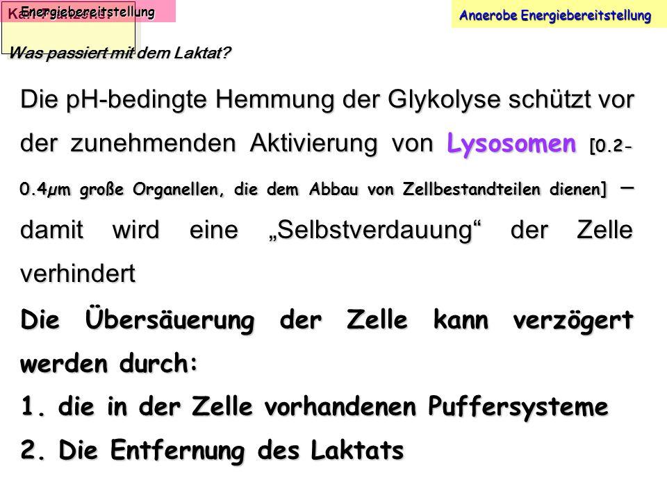 Karl-Franzens: Energiebereitstellung Anaerobe Energiebereitstellung Was passiert mit dem Laktat? Die pH-bedingte Hemmung der Glykolyse schützt vor der